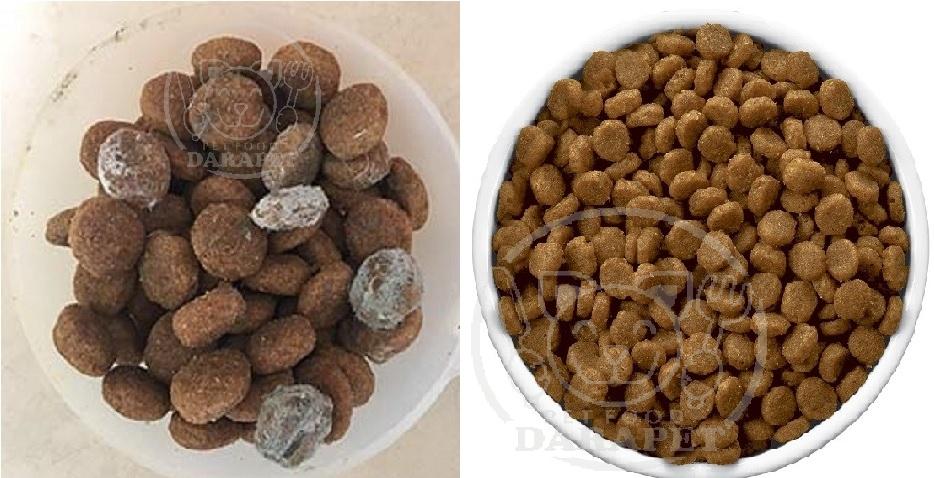 روش تشخیص بهترین غذای سگ