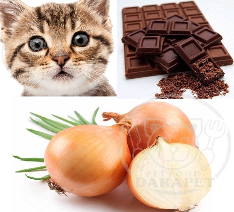 لیست ممنوعه در خوراک گریه