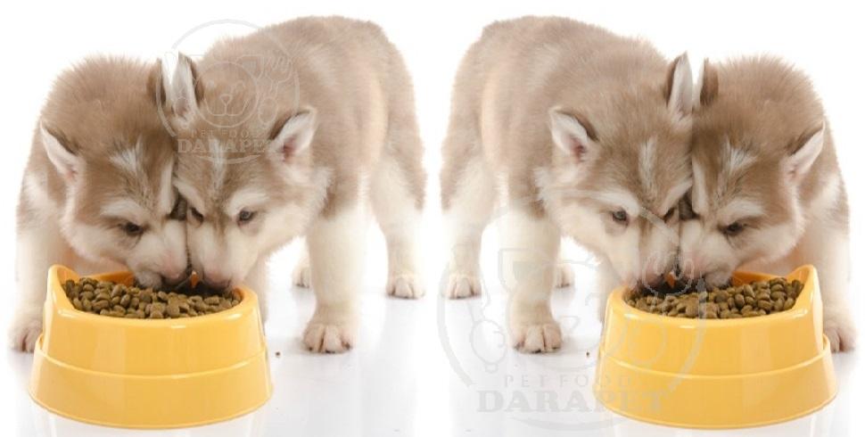 غذای مناسب برای سگ 3 ماهه
