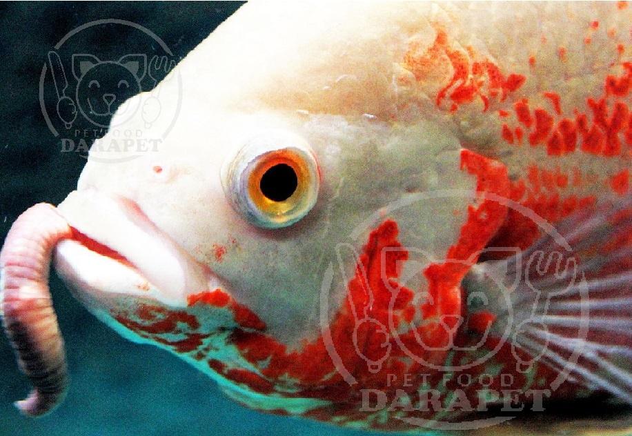 مهمترین نکات در مورد خوراک ماهی آکواریومی