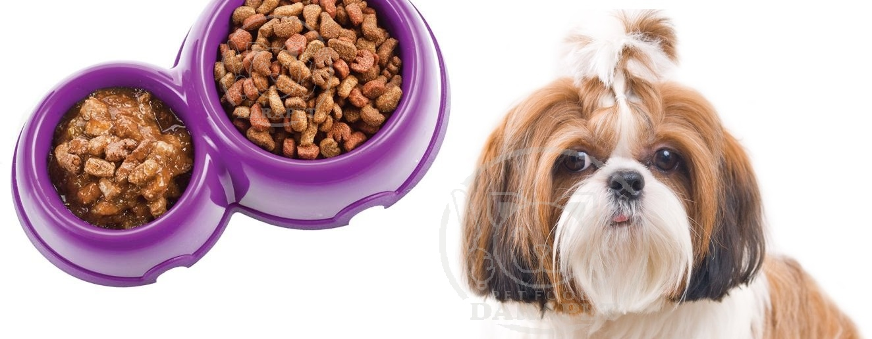 همه چیز درباره غذای سگ