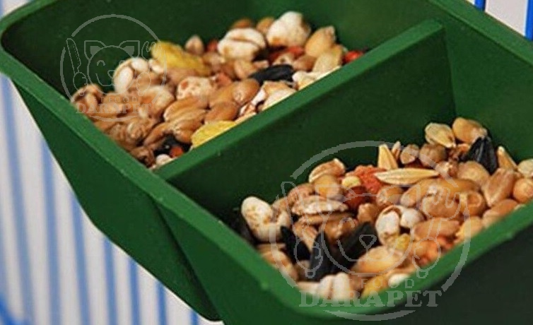 مشخصات اصلی غذای طوطی برزیلی