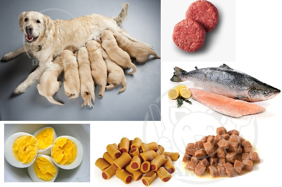غذای مفید سگ بعد از زایمان