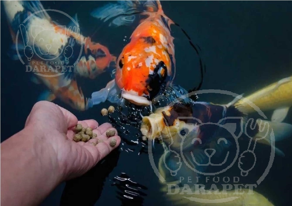 نحوه درست غذادهی به ماهی