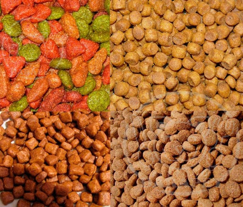 بازار روز غذای سگ فله