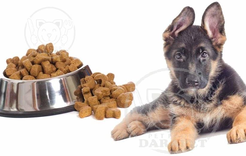 خرید غذای سگ 3 ماهه بی واسطه