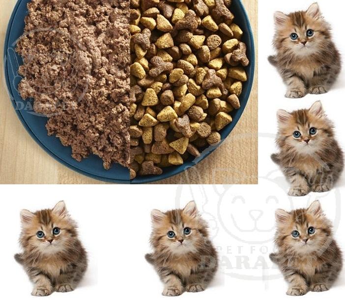 فروش مستقیم خوراک گربه خانگی