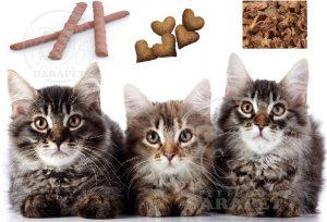 راهنمای خرید خوراک بچه گربه