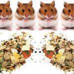 صادرات بهترین خوراک همستر مرغوب
