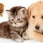 توزیع بهترین غذای حیوان خانگی