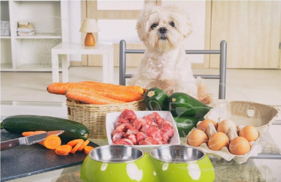 انواع غذای سگ خانگی کدامند؟