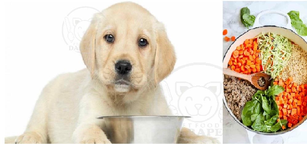 مشخصات غذای سگ چیست؟