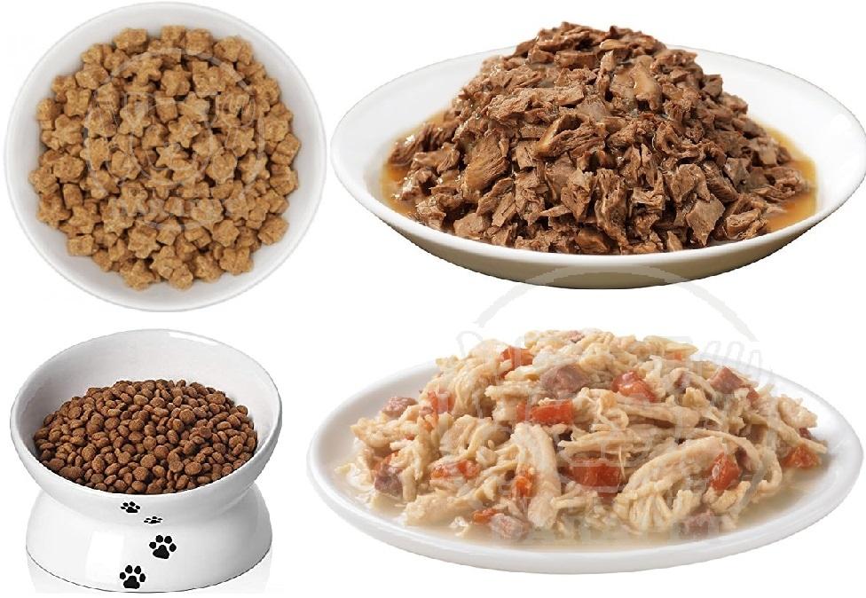 معرفی انواع خوراک گربه با کیفیت عالی