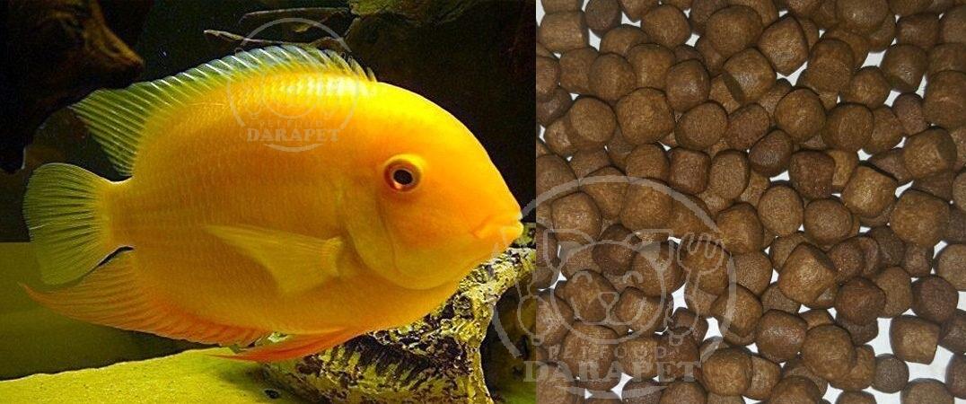نکات مهم در مورد خوراک ماهی آکواریومی
