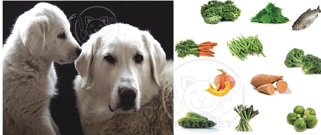 غذای مفید برای سگ چه غذایی است؟