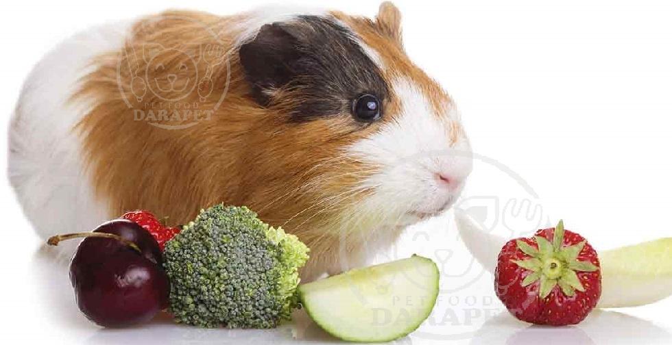 به خوکچه هندی چه غذاهایی بدهیم؟