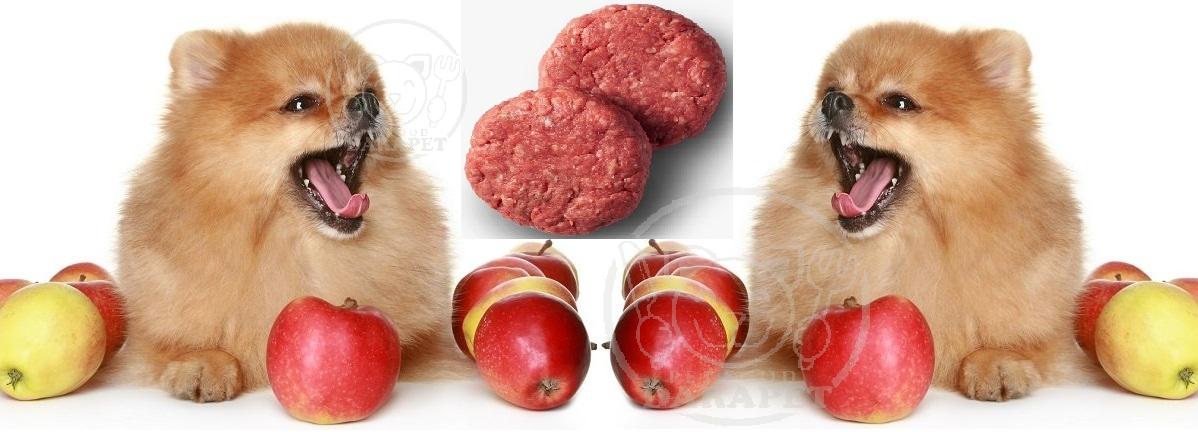 غذای مناسب برای سگ خانگی چیست؟