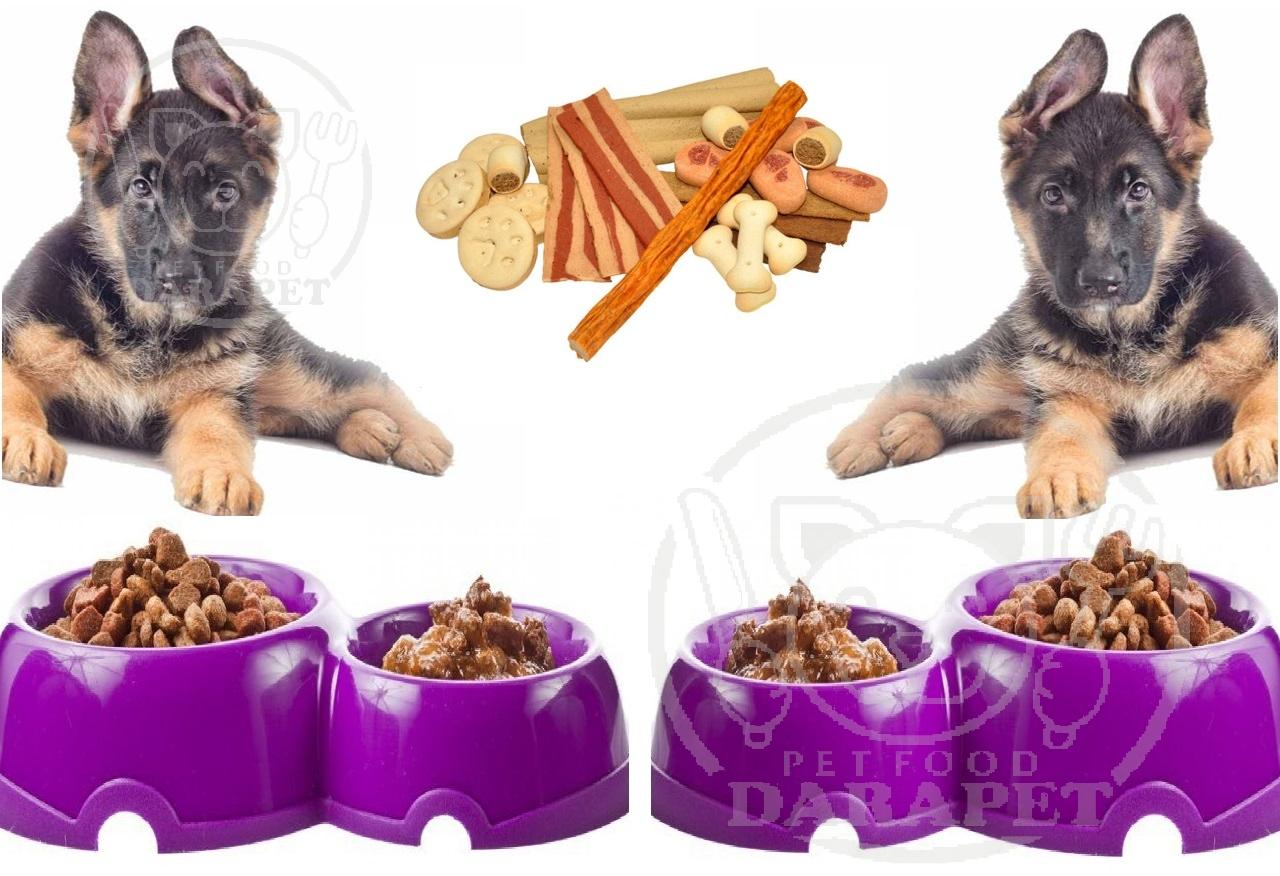 دانستنی هایی درباره غذای سگ 3 ماهه