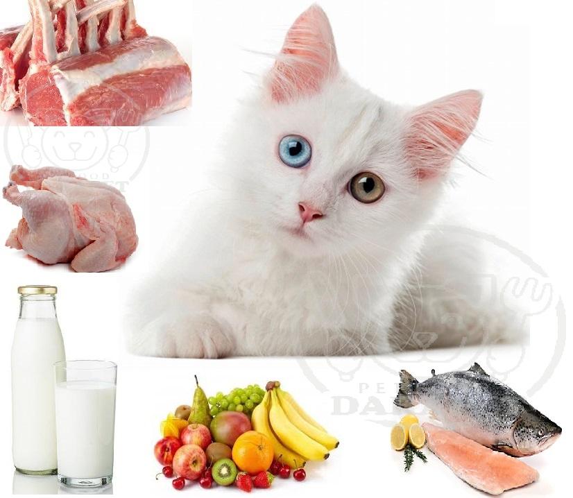 بهترین غذای گربه ایرانی چیست؟
