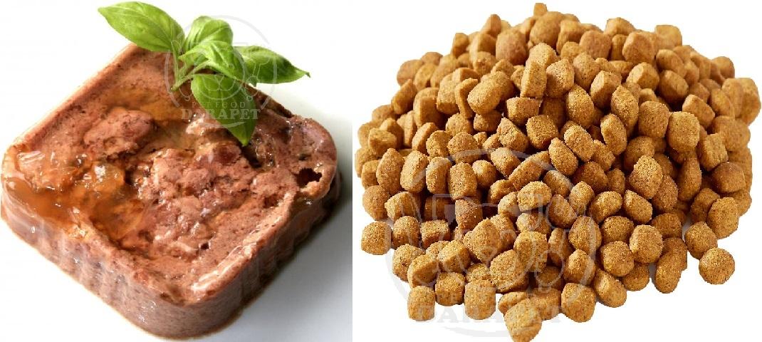 عوامل تاثیرگذار بر کیفیت انواع غذای سگ