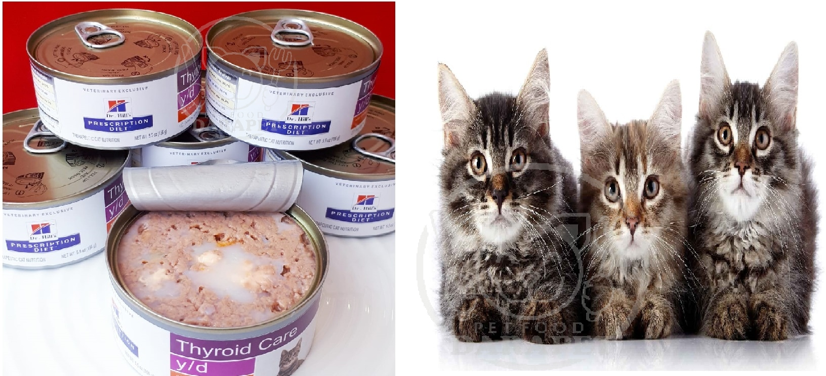 نرخ خوراک گربه پرشین