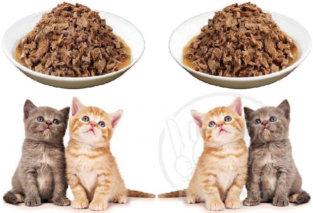 برترین فروشنده خوراک بچه گربه