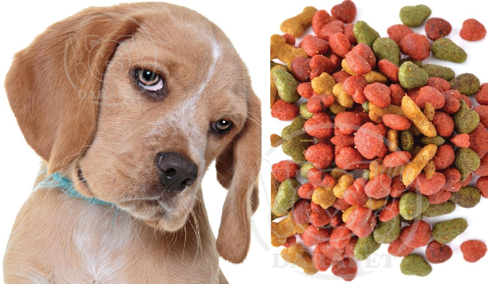ارائه غذای سگ فله