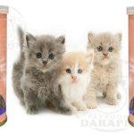 بهترین قیمت کنسرو بچه گربه ایرانی