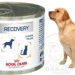 بازار کنسرو ریکاوری سگ صادراتی