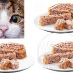 شرکت فروش کنسرو بچه گربه ایرانی
