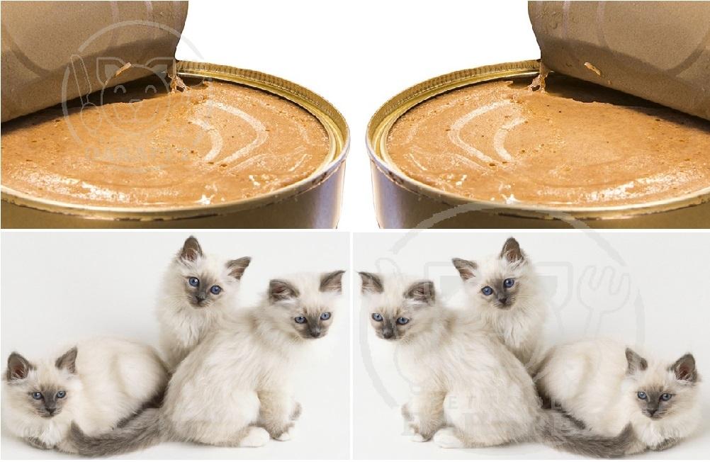 خرید بهترین خوراک بچه گربه