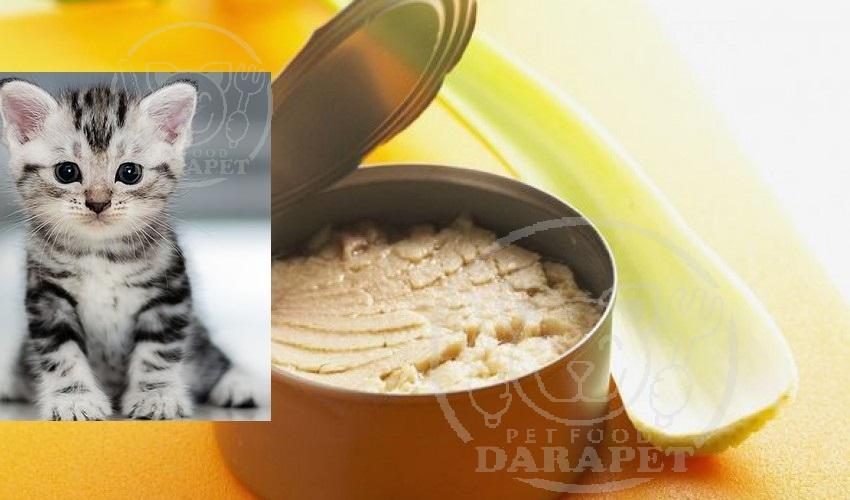 بررسی خصوصیات کنسرو بچه گربه