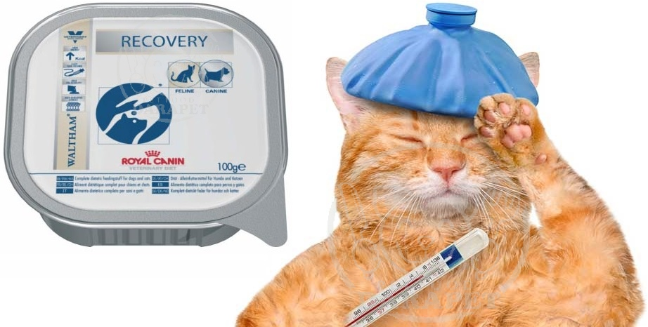 کنسرو ریکاوری گربه چه ویژگی هایی دارد؟