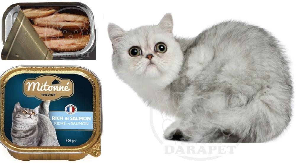 کنسرو ماهی چه مزیت هایی برای گربه دارد؟