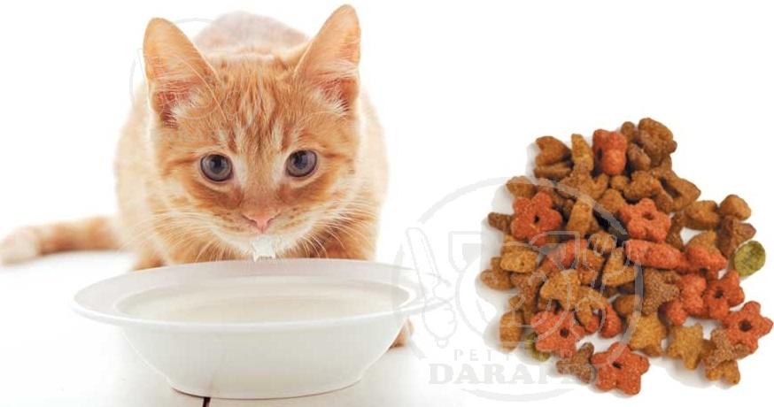 منظور از غذای تشویقی گربه چیست؟