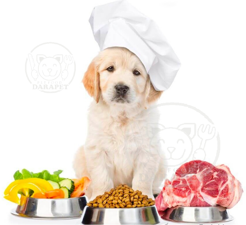 غذای مورد علاقه سگ چیست؟