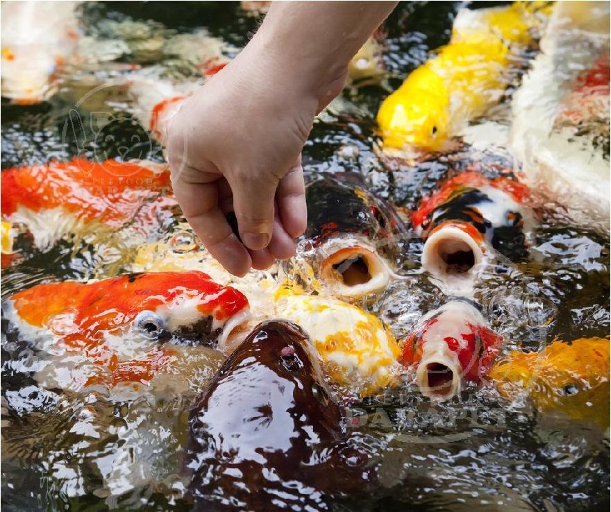 ماهی ها چه غذاهایی می خورند؟