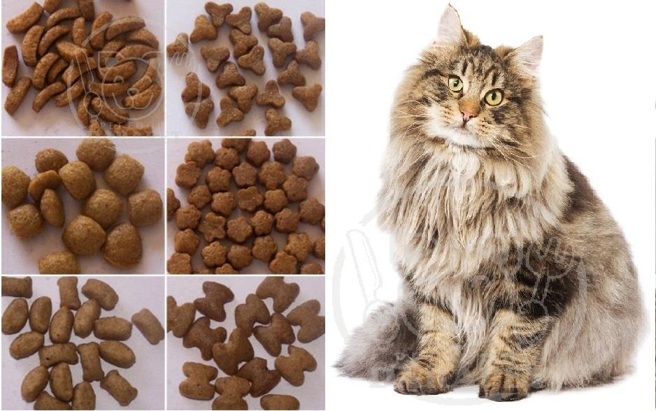مشخصات خوراک گربه پرشین چیست؟