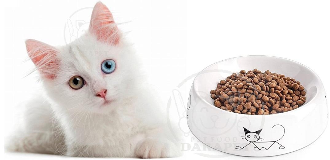 آشنایی با بهترین خوراک گربه