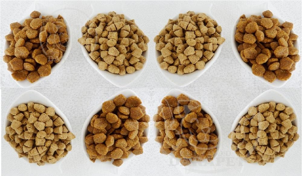 صادرات انواع غذای خشک گربه