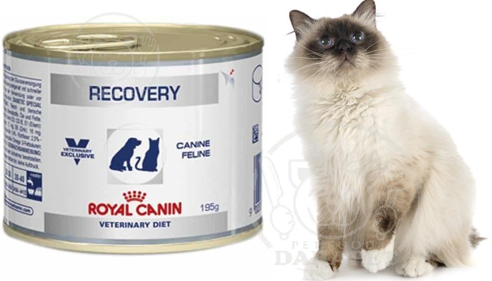بازار عرضه کنسرو ریکاوری گربه