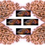 مرجع فروش غذای ماهی اکواریومی ارزان