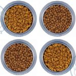 بازار فروش غذای مفید گربه