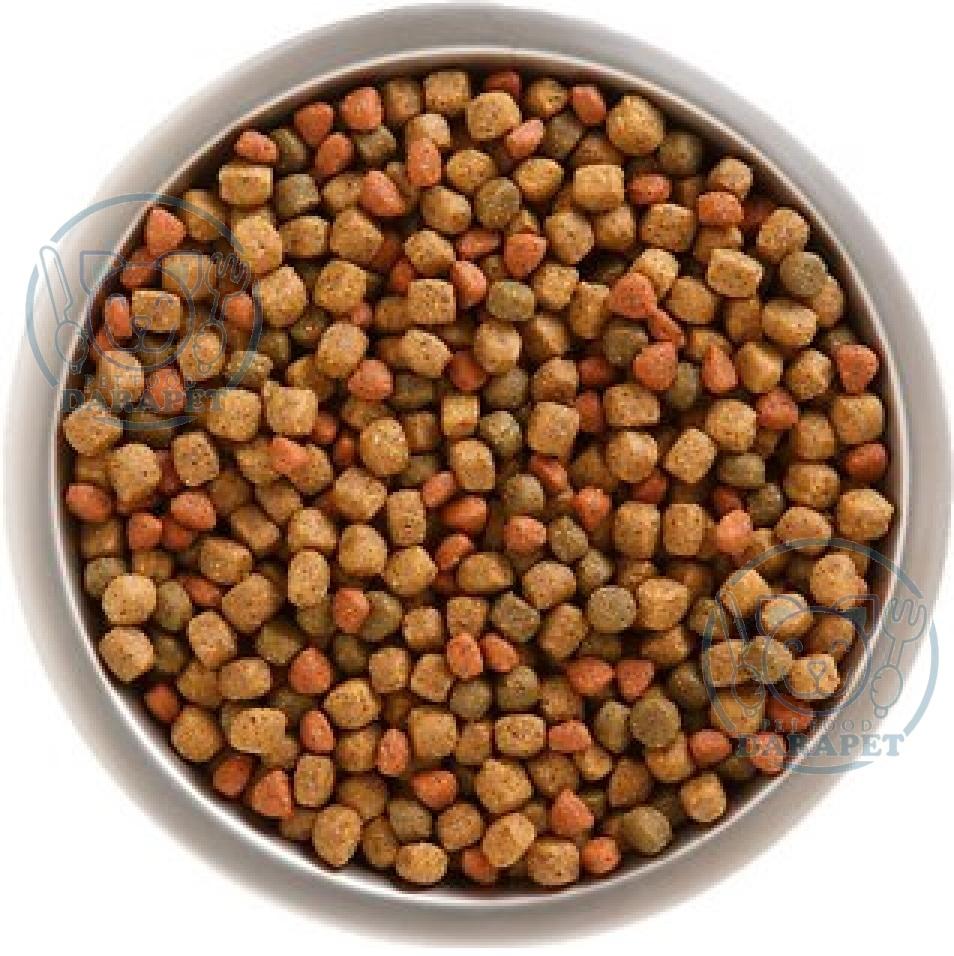 تامین کننده غذای خشک سگ