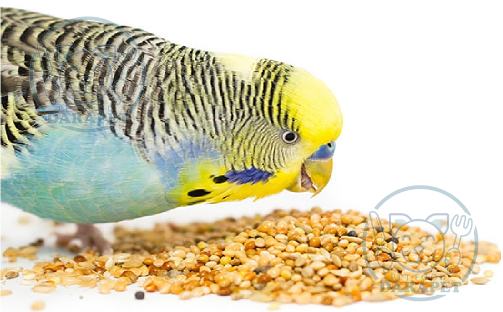 توزیع کننده خوراک مرغ عشق