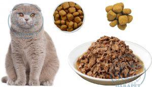 تولیدی غذای گربه اسکاتیش