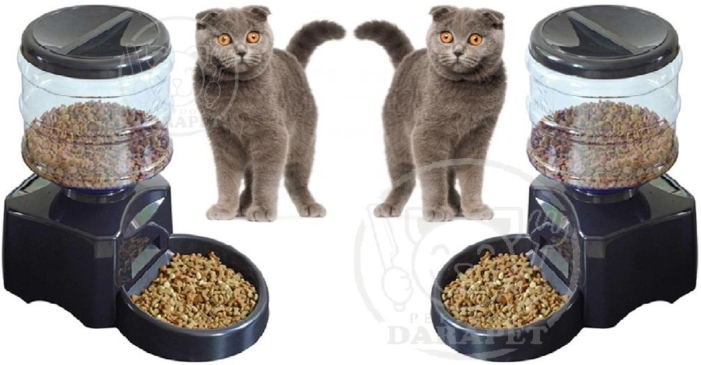 بازار خرید غذای گربه اسکاتیش