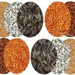 تولیدی غذای طوطی ملنگو