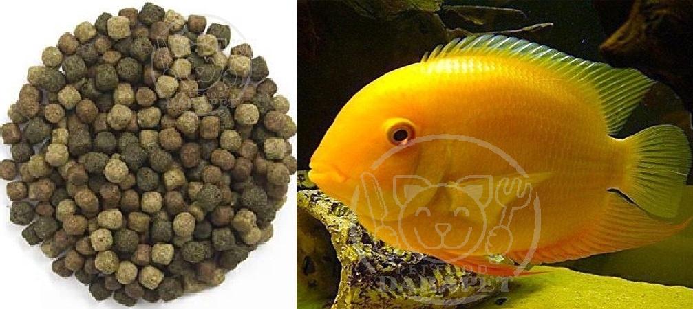 پخش مستقیم غذای ماهی اکواریومی