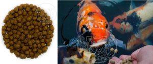 صادر کننده غذای ماهی اکواریومی ارزان